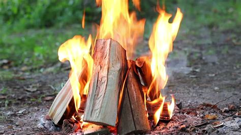 what of wood to burn in fireplace up of brazier with burning stock footage 100