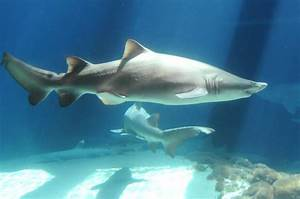 Don't go in the water! TV's Shark Week is back - slide 13 ...