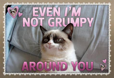 Grumpy Cat Meme Valentines Day - not so grumpy at all grumpy cat cat and memes