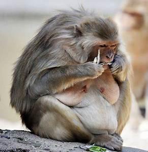 World's Ugliest Animals