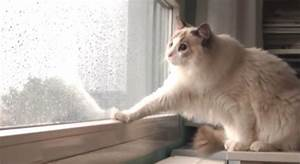 Kitty Sees Rain Falling For The First Time, Is Utterly ...