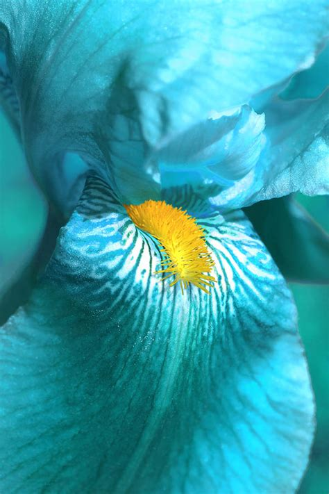 iris flower in turquoise photograph by jennie schell