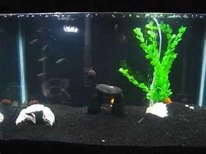 Black Neon Tetras 10 gallon tank