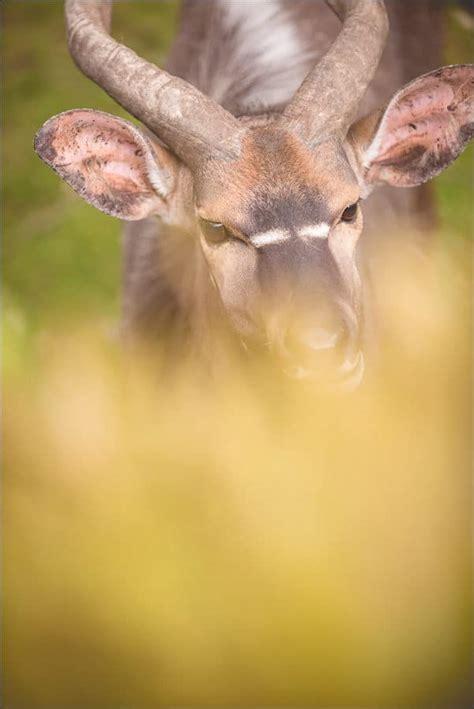 tierfotografie opel zoo kronberg exotisch animalisch