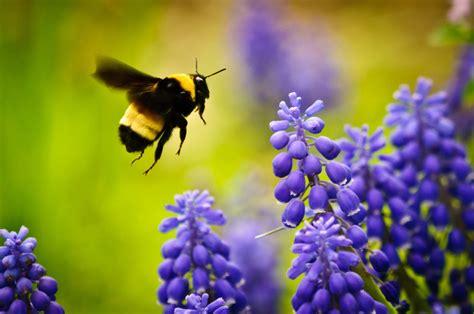 create  bee friendly garden nature ridge homes