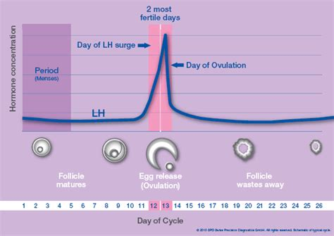 learn how reliable the clearblue digital ovulation test is healthcare professionals