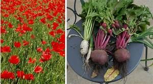 Que Planter En Juin : que faire dans le potager en juin ~ Melissatoandfro.com Idées de Décoration