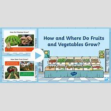 * New * Carrot Club How And Where Do Fruits And Vegetables Grow? Powerpoint