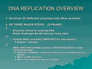 Structure Of Dna And Replication2009