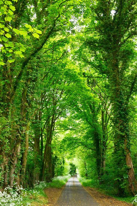 natural images hd   nature