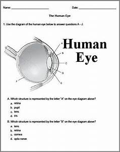 Resource For Biology Worksheets And Experiments