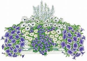 Petunien Samen Kaufen : balkonpflanzen set blau wei er traum kaufen otto ~ Frokenaadalensverden.com Haus und Dekorationen