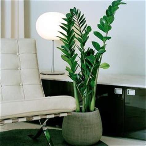 plante interieur mi ombre les plantes d ombre des plantes qui s 233 panouissent 224 l ombre