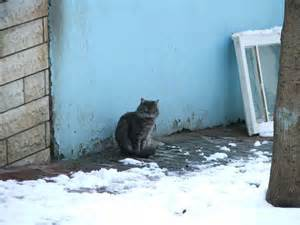 how to take care of a stray cat how to care for feral cats during the winter mnn