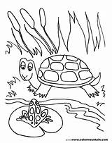 Pond Coloring Pages Frog Drawing Turtle Lily Pad Fish Sheet Print Printable Habitat Sea Preschoolers Drawings Getdrawings Getcolorings Animals Activity sketch template