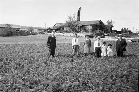 Seattle Now & Then The Ishii Family Farm