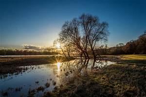 Free, Images, Landscape, Tree, Nature, Grass, Horizon, Marsh, Wilderness, Mountain, Winter