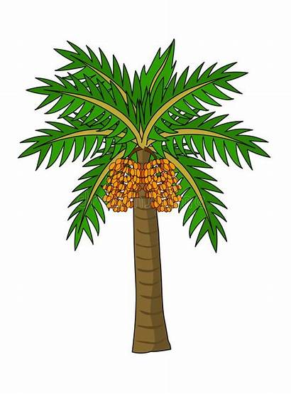 Palm Tree Date Clip Vector Illustration Clipart