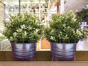 Pianta Di Fioritura Del Gelsomino In Vaso Immagine Stock
