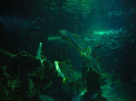 sea sydney aquarium location facts attraction best time to visit