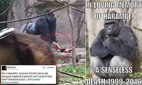 fury  parents  cincinnati zoo  harambe  gorilla
