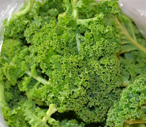 cook kale how to cook curly kale easy recipes and ways to cook this fab veg