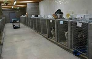 indoor dog kennels buyers guide 2016 cat dog cage With build indoor dog kennel