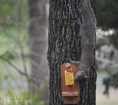 diy project build your own basic squirrel feeder do it