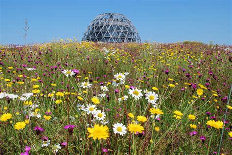 Dachbegruenung Pflanzen Fuer Die Extensivbegruenung by Biodiversit 228 T Naturdach Dachbegr 252 Nung Optigr 252 N Der