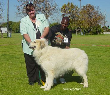 Working Herding Breeds Club The Cape