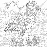 Puffin Coloring Pages Animal Adults Print Already sketch template