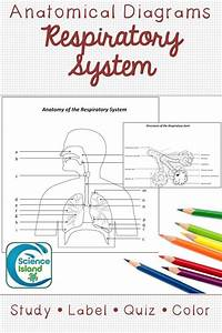 Respiratory System Diagrams  U0026 Quizzes