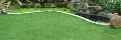 Bermuda Grass, Carabao Grass Supplier