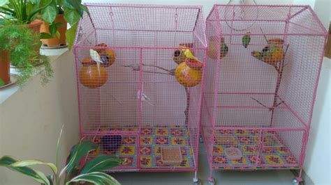decorate  colourful love birds cage youtube