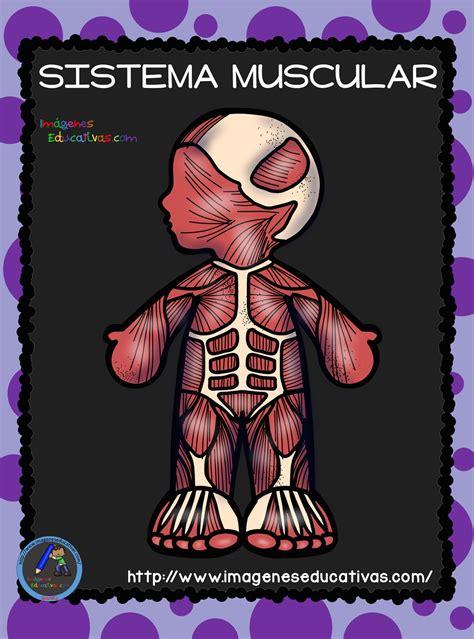 el cuerpo humano aparatos y sistemas para primaria 6