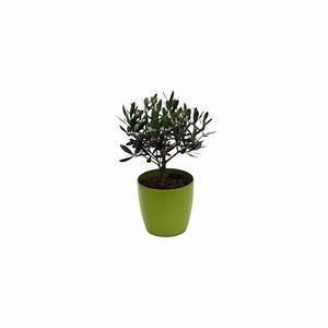 Cache Pot Plante : olivier cache pot olive plantes et jardins ~ Teatrodelosmanantiales.com Idées de Décoration