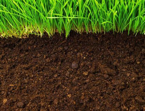 Ciri Ciri Tanah Subur untuk Pertanian PETANI