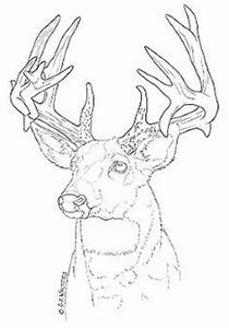 free deer wood burning patterns woodworking projects plans With pyrography templates free