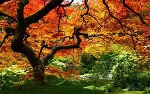 Fall, Foliage, Wallpaper, For, Desktop, U00b7, U2460, Wallpapertag