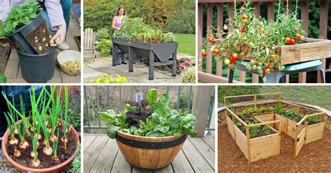 Diy Healthy And Organic Vegetable Container Garden The