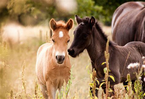 das pferd ehorses magazin alles rund ums pferd