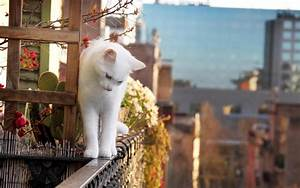 White cat at balcony so cute wallpaper HD Wallpapers Rocks