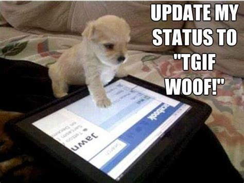 tgif dog puppy pet friday quotes pinterest