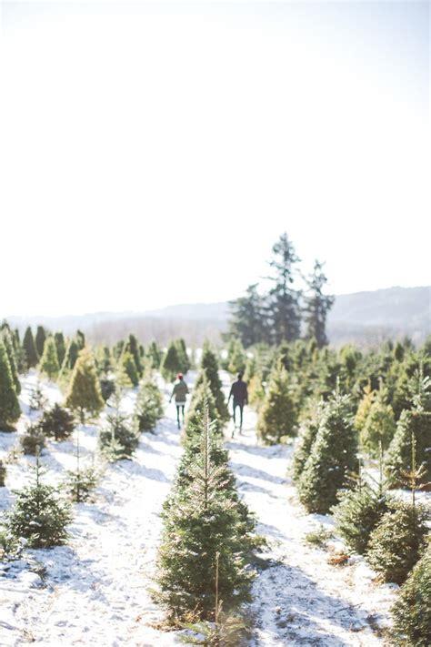 best christmas tree farm ri best 25 tree farms ideas on tree shops tree and diy