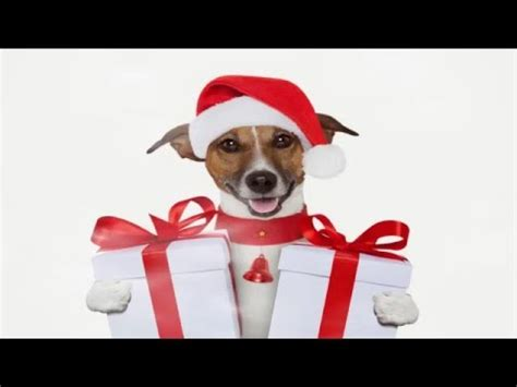 merry christmas dogs and cats version 2015 2016 youtube
