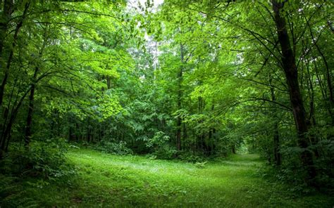 Green Forest Image by Lush Green Forest Path Wallpapers Lush Green