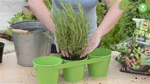 Kräuter Pflanzen Topf : kr uter im topf an pflanzen und pflegen youtube ~ Lizthompson.info Haus und Dekorationen