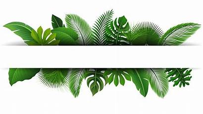 Tropical Leaves Vector Nature Text Summer Space