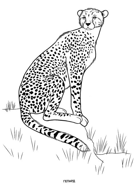 wild animals coloring pages  kids  print