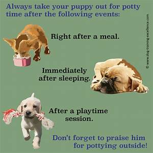 Potty training a puppy in a week for How to train your dog to pee